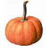 Pumpkin, canned, without salt
